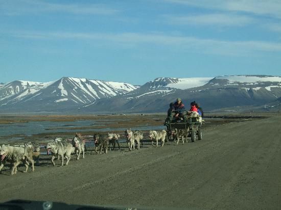 2015/06/07 MSC Splendida Germania, Norvegia, Svalbard and Jan Mayen Islands-dogsledding-can-also-jpg