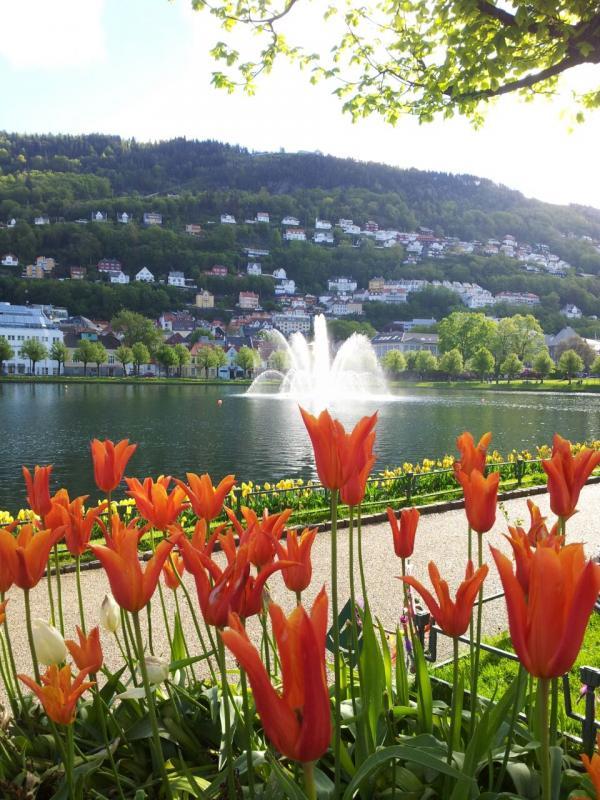 Cosa visitare a Bergen -Norvegia--uploadfromtaptalk1433835295357-jpg