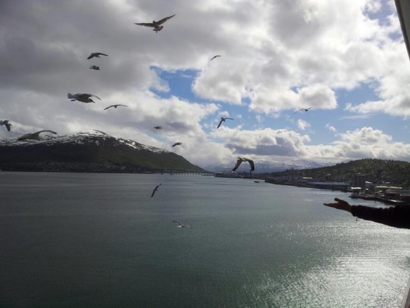 2015/06/11 - MSC Splendida -Tromso-imageuploadedbytapatalk1434029184-345439-jpg