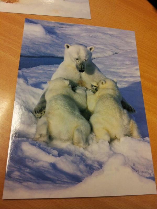 2015/06/13 - MSC Splendida - Longyearbyen-uploadfromtaptalk1434198965718-jpg