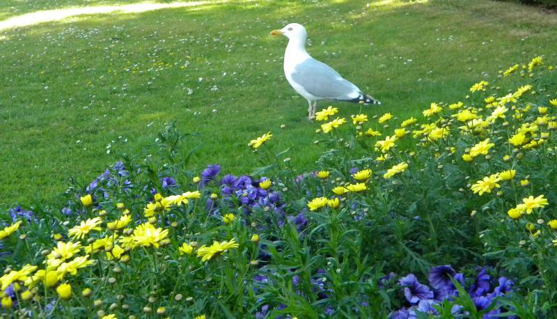 Costa favolosa- fiordi norvegesi- 06/06/--13/06/2015-dscn4758-jpg
