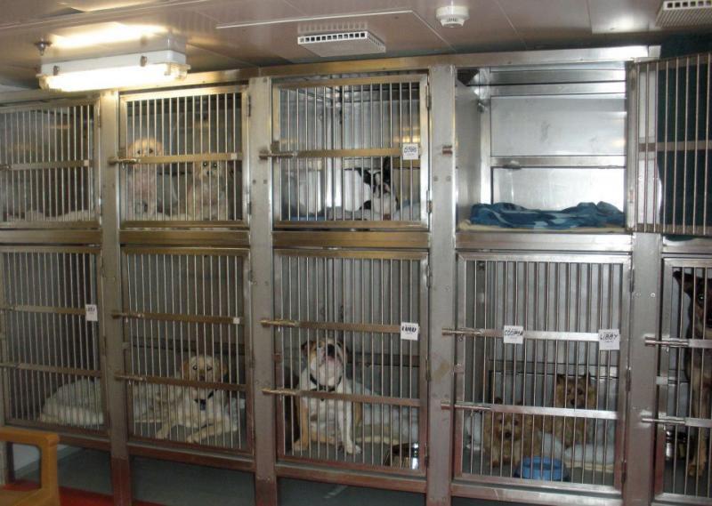 Quando si va in crociera col cane.-cani-bordo-navi-crociera-2-jpg