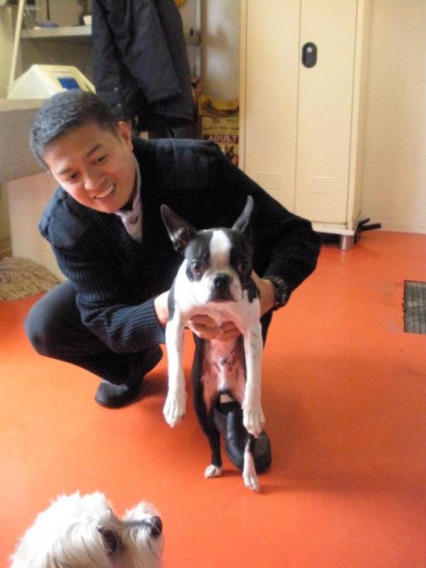 Quando si va in crociera col cane.-cani-bordo-navi-crociera-8-jpg