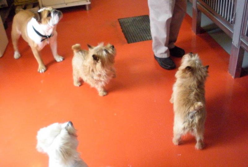 Quando si va in crociera col cane.-cani-bordo-navi-crociera-14-jpg