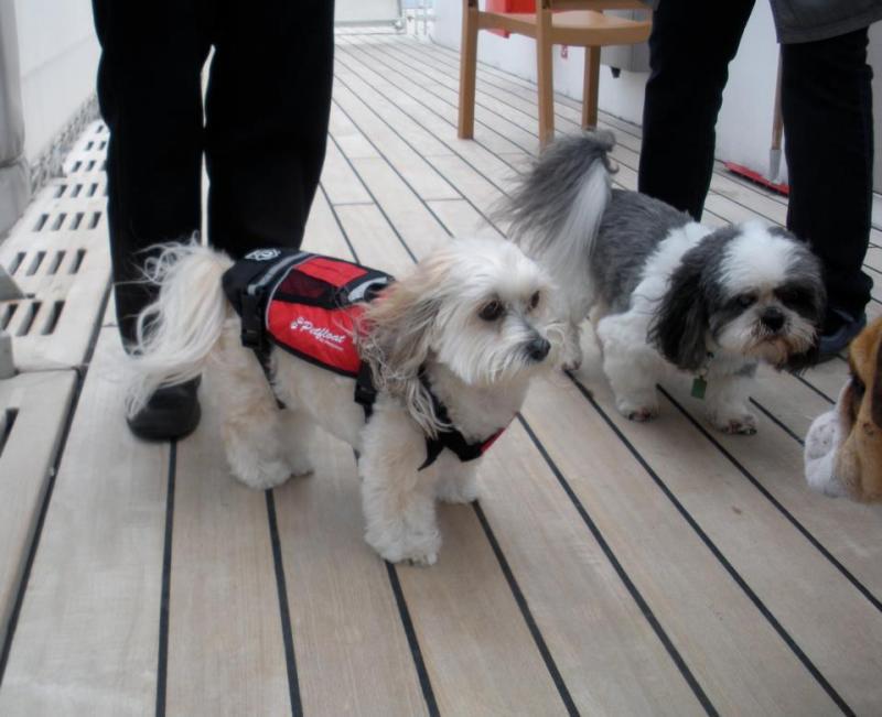 Quando si va in crociera col cane.-cani-bordo-navi-crociera-15-jpg