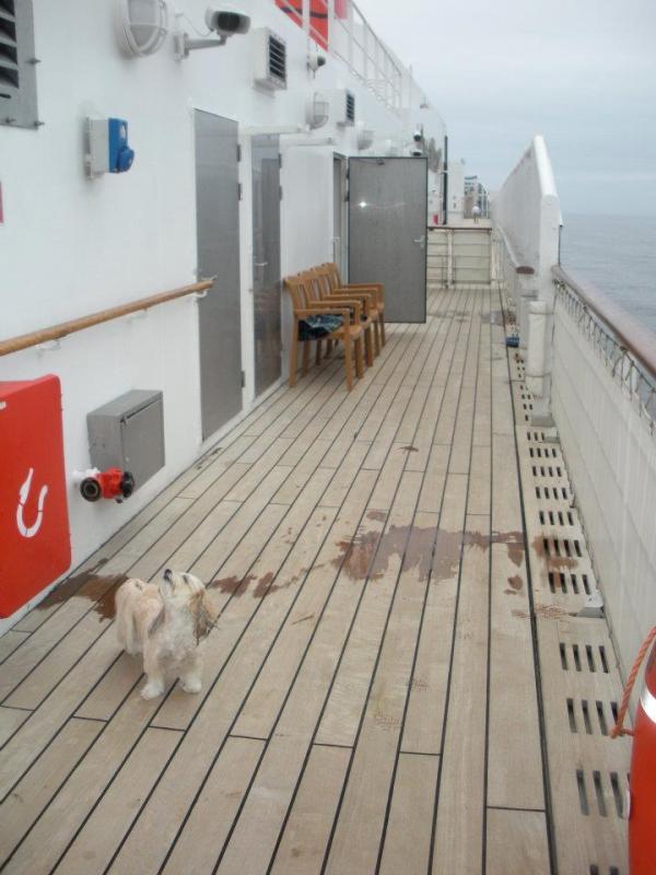 Quando si va in crociera col cane.-cani-bordo-navi-crociera-20-jpg