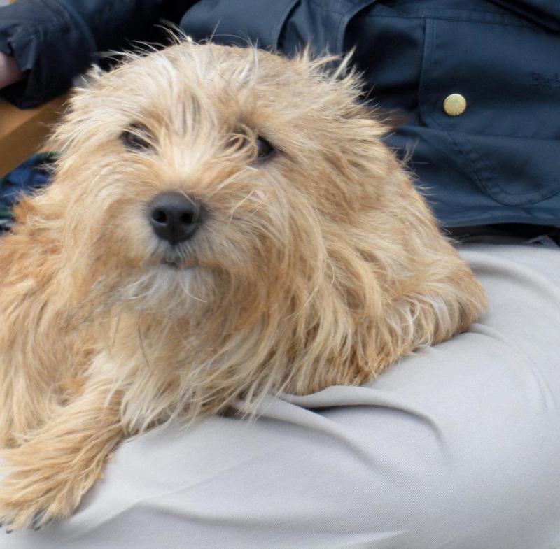 Quando si va in crociera col cane.-cani-bordo-navi-crociera-22-jpg