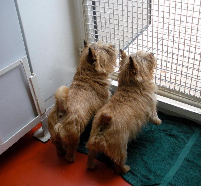 Quando si va in crociera col cane.-cani-bordo-navi-crociera-24-jpg