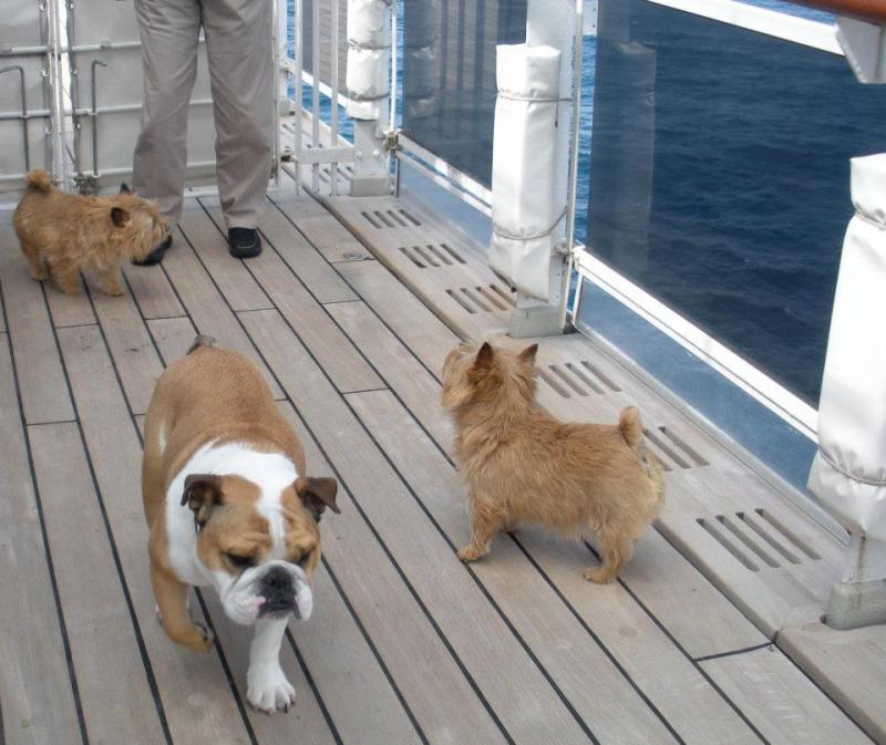 Quando si va in crociera col cane.-cani-bordo-navi-crociera-25-jpg