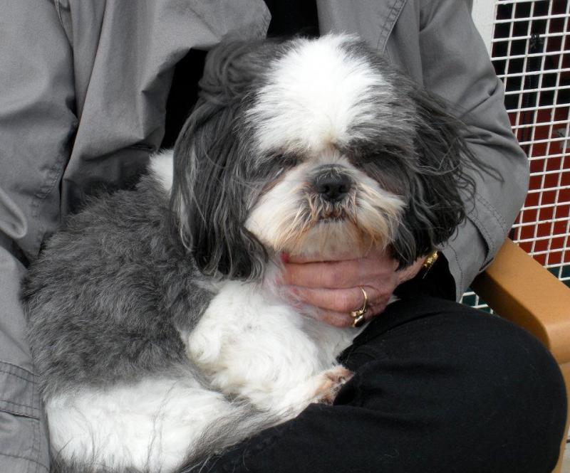 Quando si va in crociera col cane.-cani-bordo-navi-crociera-5-jpg