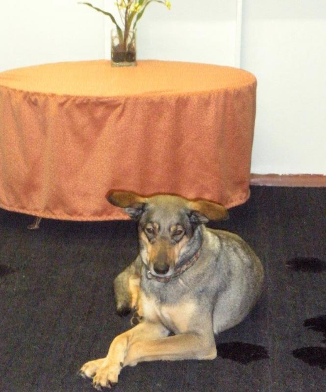 Quando si va in crociera col cane.-cani-bordo-navi-crociera-6-jpg
