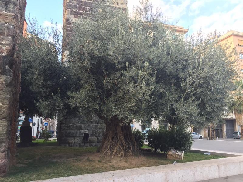 2015/11/28 Costa Diadema Partenza da Savona-uploadfromtaptalk1448722582408-jpg