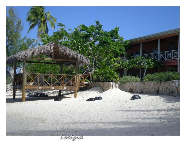 23/12/11 - Grand Cayman-dscn4708-jpg