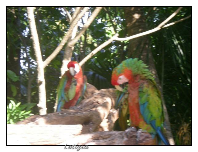 26/12/11 - Cozumel-dscn4948-jpg