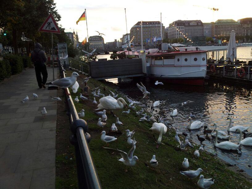 2013/09/23 Seatrade Partenza da Nizza per Amburgo-amburgo-seatrade-liveboat-crociere-2-jpg