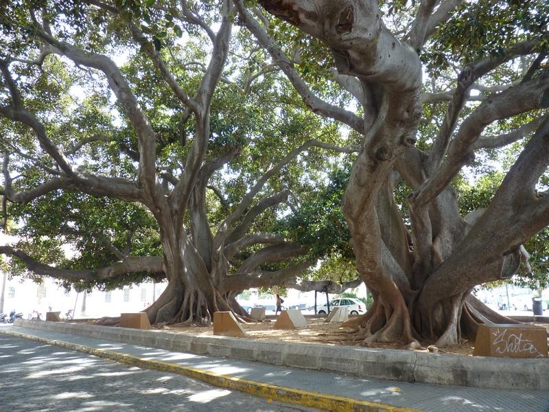 Costa Atlantica: le Grandi Capitali dal 4 al 14 settembre-grandi-alberi-2-jpg