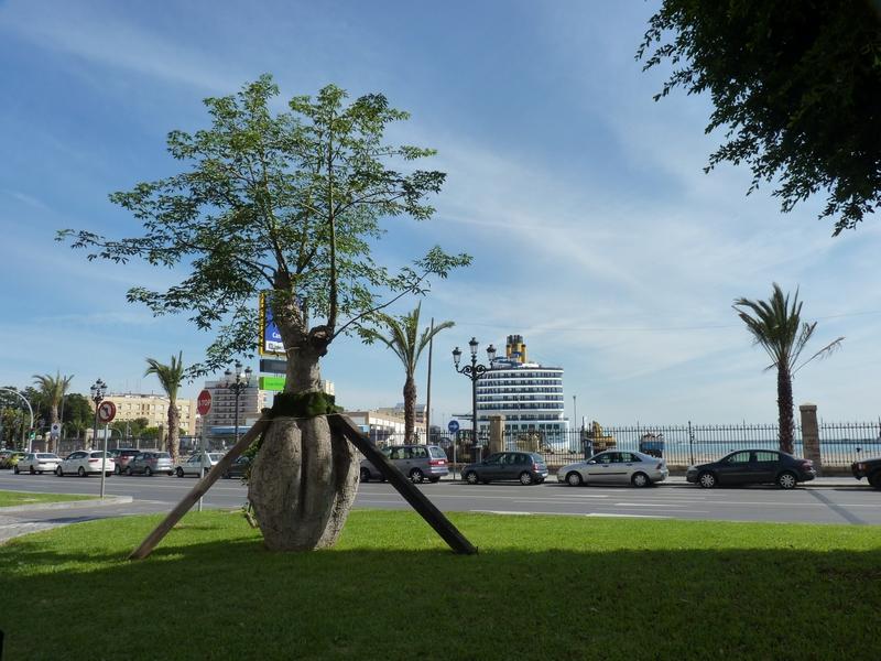 Costa Atlantica: le Grandi Capitali dal 4 al 14 settembre-grandi-alberi-4-jpg