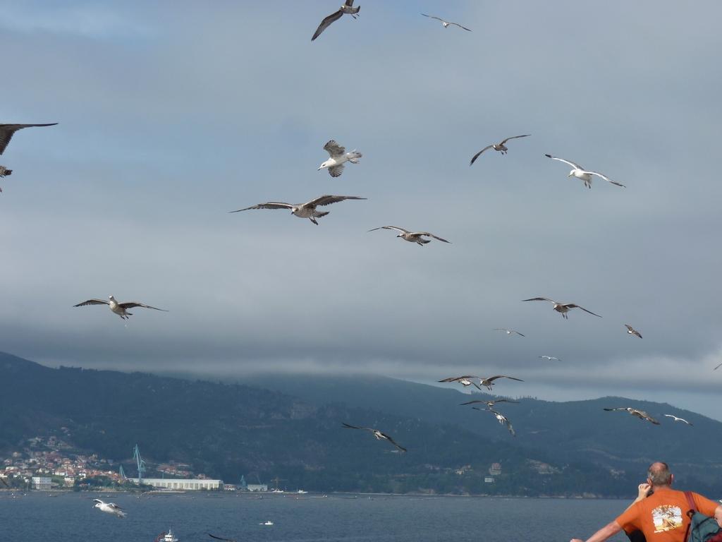 Costa Atlantica: le Grandi Capitali dal 4 al 14 settembre-gabbiani-curiosi-jpg