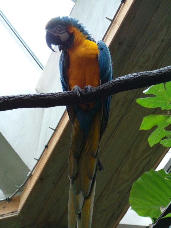 New York, soggiorno-zoo-new-york-8-jpg