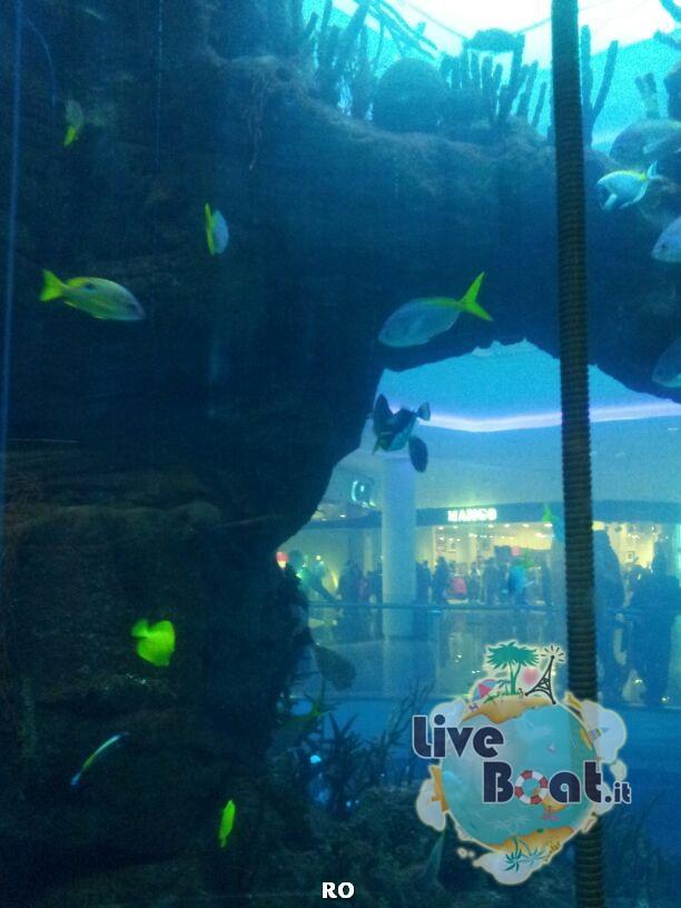 2014/01/11 - Casablanca - Costa Classica-17costa-classica-casablanca-liveboat-jpg