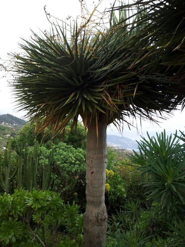 2014/01/14 - St. Cruz de La Palma - Costa Classica-uploadfromtaptalk1389710462442-jpg