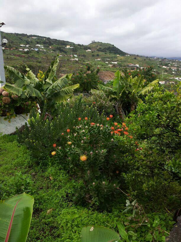 2014/01/14 - St. Cruz de La Palma - Costa Classica-uploadfromtaptalk1389710814674-jpg