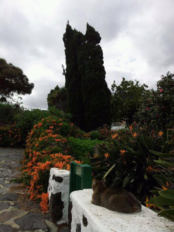 2014/01/14 - St. Cruz de La Palma - Costa Classica-uploadfromtaptalk1389710865550-jpg