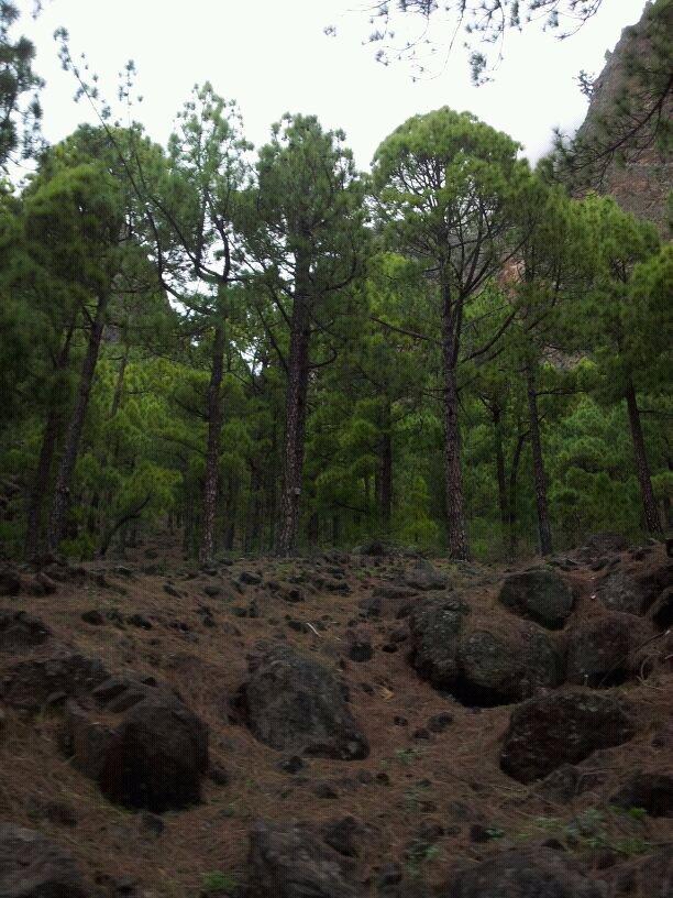 2014/01/14 - St. Cruz de La Palma - Costa Classica-uploadfromtaptalk1389715255518-jpg