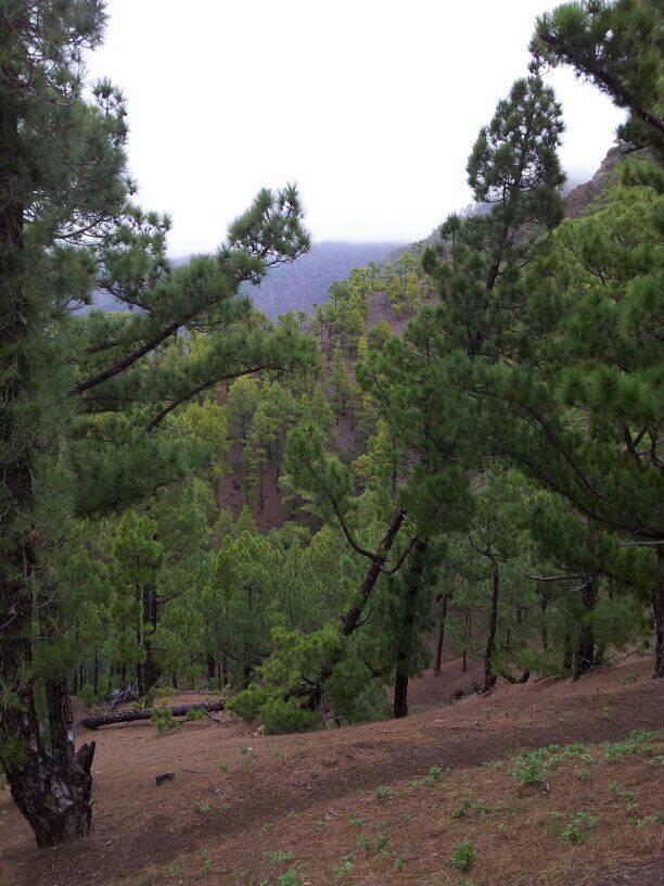 2014/01/14 - St. Cruz de La Palma - Costa Classica-uploadfromtaptalk1389715393001-jpg