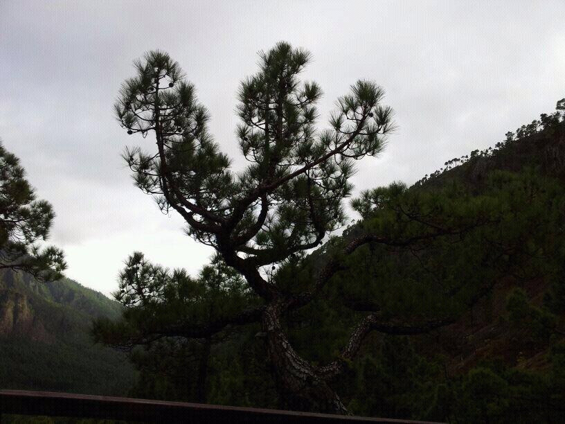 2014/01/14 - St. Cruz de La Palma - Costa Classica-uploadfromtaptalk1389716609416-jpg