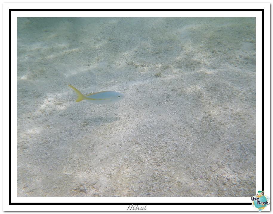 "Costa Luminosa ""Oceano - Caraibi"" 30/04 - 14/05/2012-antigua_liveboat_9-jpg"