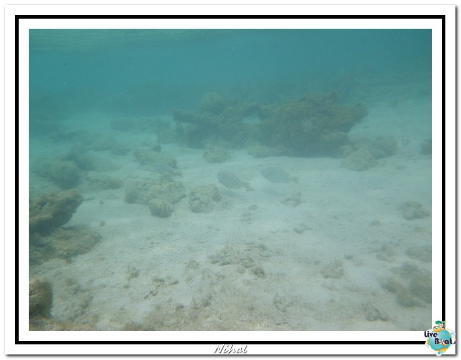 "Costa Luminosa ""Oceano - Caraibi"" 30/04 - 14/05/2012-antigua_liveboat_13-jpg"