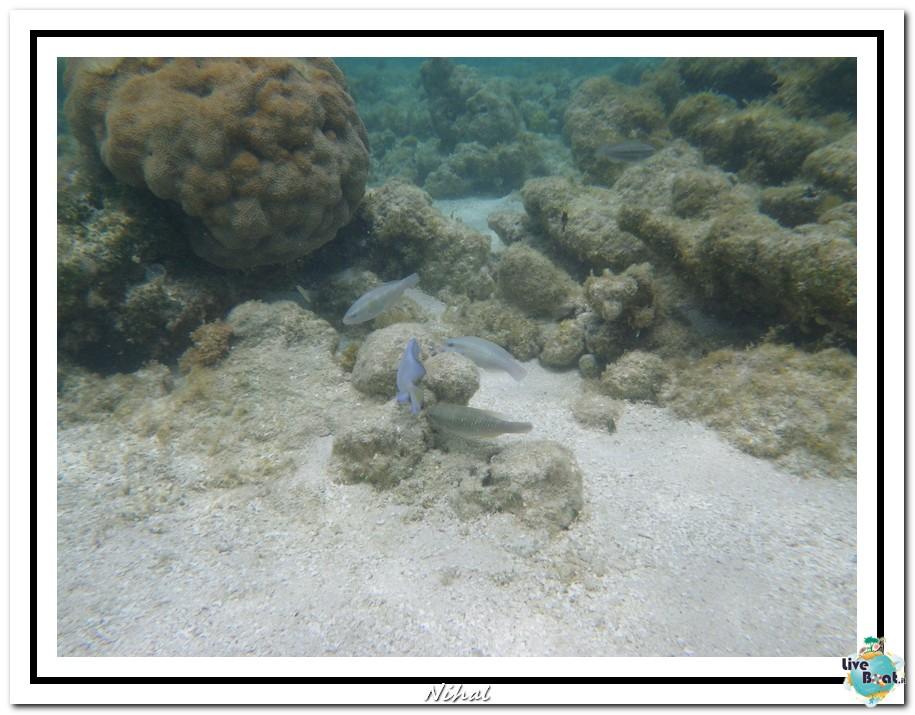 "Costa Luminosa ""Oceano - Caraibi"" 30/04 - 14/05/2012-antigua_liveboat_15-jpg"