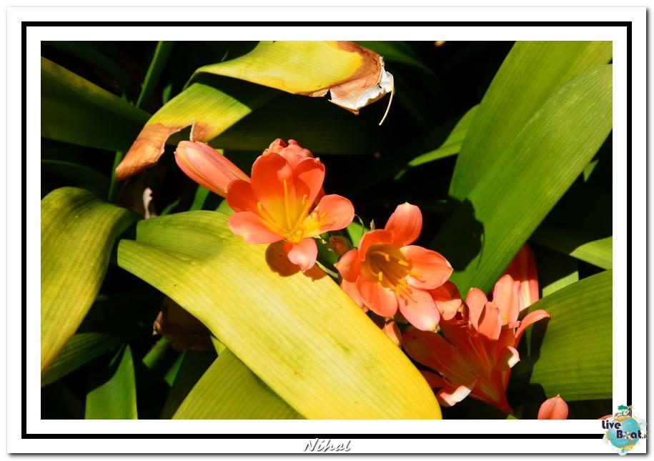 "Costa Luminosa ""Oceano - Caraibi"" 30/04 - 14/05/2012-tenerife_liveboat_42-jpg"