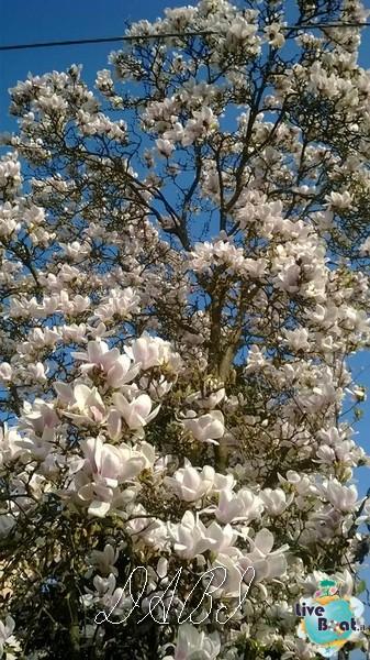 Buona primavera a tutti!!!-magnolia-jpg