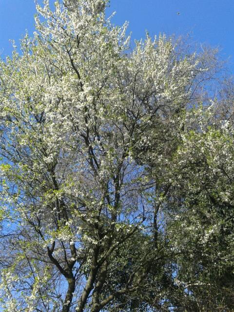 Buona primavera a tutti!!!-uploadfromtaptalk1395347451734-jpg