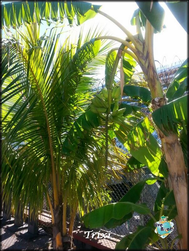 2014/03/25 - Roseau - Costa Mediterranea-14-crociera-costa-mediterranea-caraibi-jpg