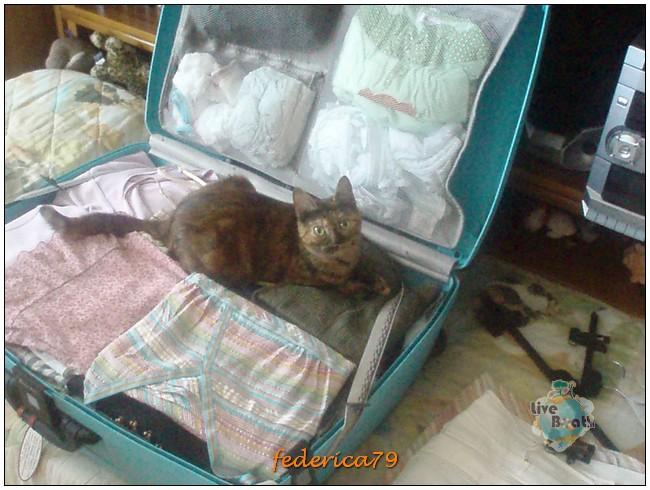 Crociera sul Nilo + Il Cairo 13/20-08-2006-1-prepariamo-valigia-gatta-vuole-venire-jpg