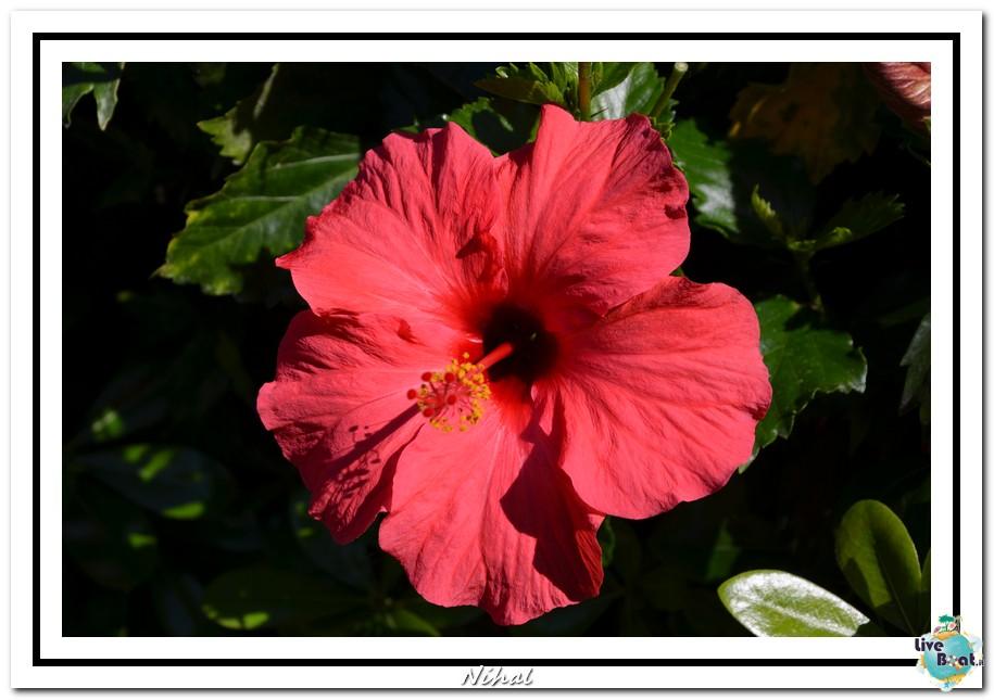"""Costa Luminosa """"Oceano - Caraibi"""" 30/04 - 14/05/2012-malaga_liveboat_22-jpg"""