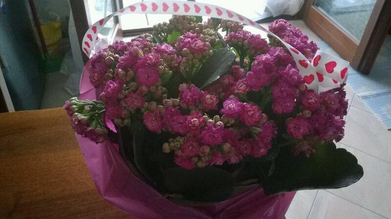 buona festa della mamma-uploadfromtaptalk1399788052178-jpg