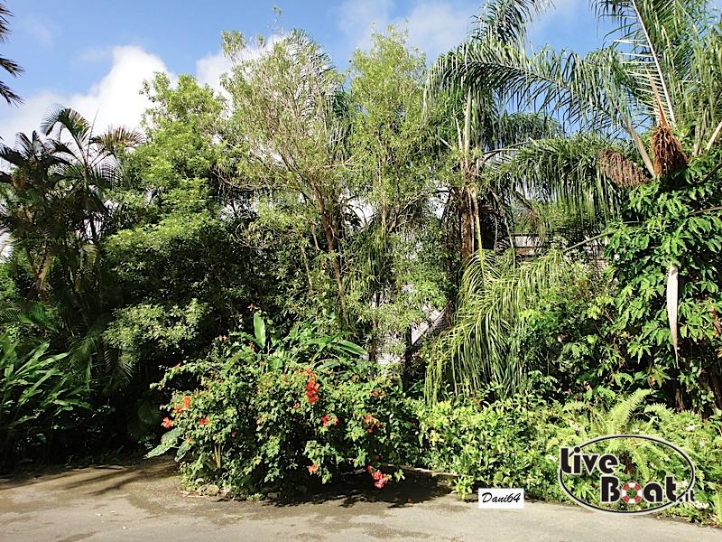 Barbados (Antille) 15/01/2011-dsc01787-jpg