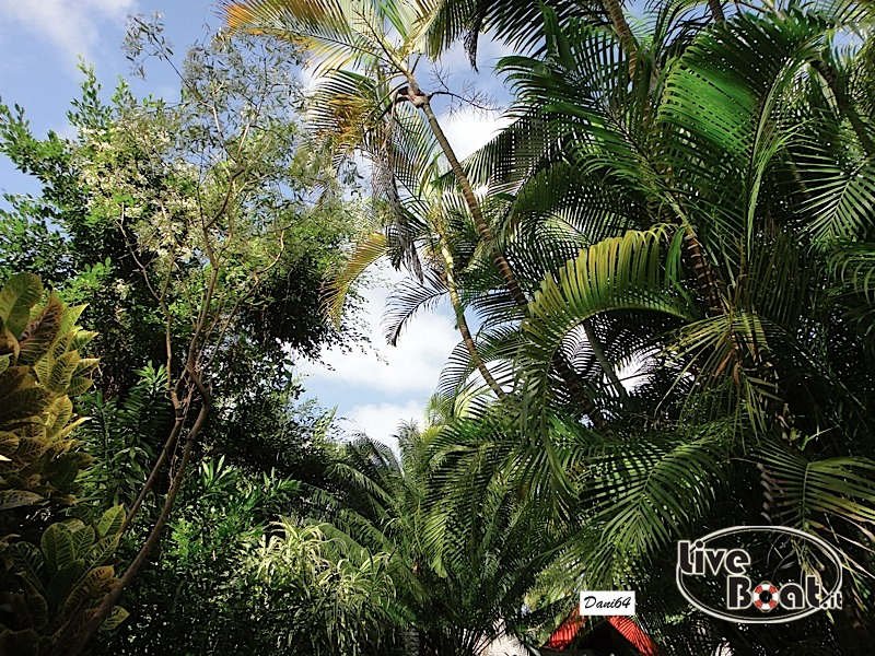 Barbados (Antille) 15/01/2011-dsc01789-jpg