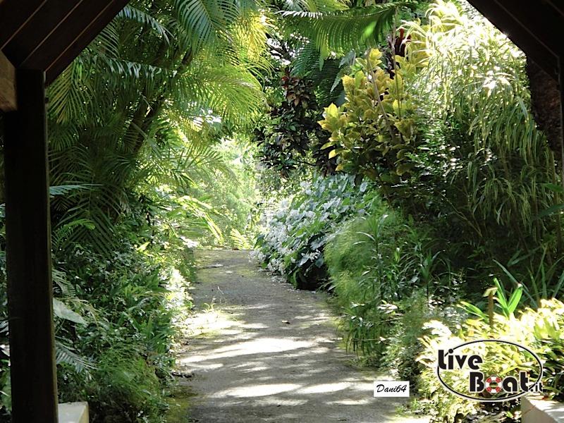Barbados (Antille) 15/01/2011-dsc01790-jpg