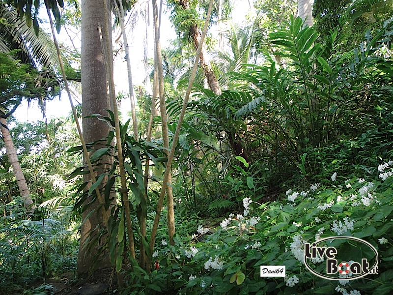 Barbados (Antille) 15/01/2011-dsc01797-jpg