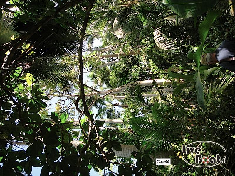 Barbados (Antille) 15/01/2011-dsc01802-jpg
