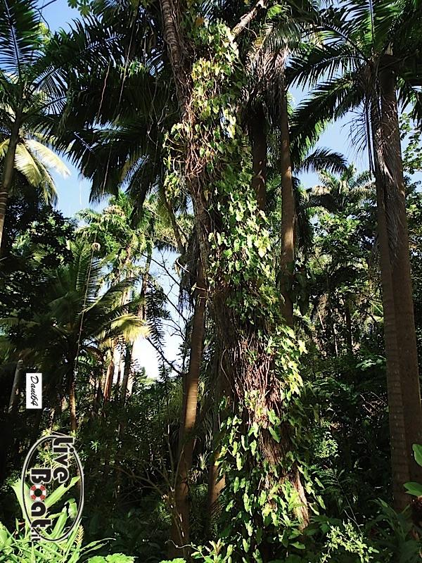 Barbados (Antille) 15/01/2011-dsc01804-jpg