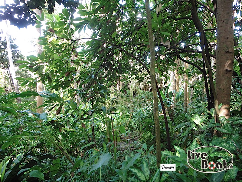 Barbados (Antille) 15/01/2011-dsc01805-jpg