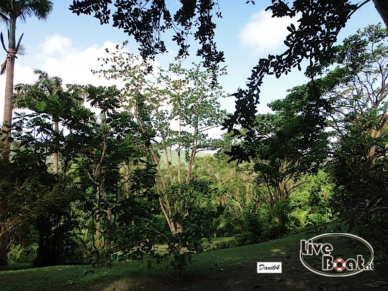 Barbados (Antille) 15/01/2011-dsc01806-jpg