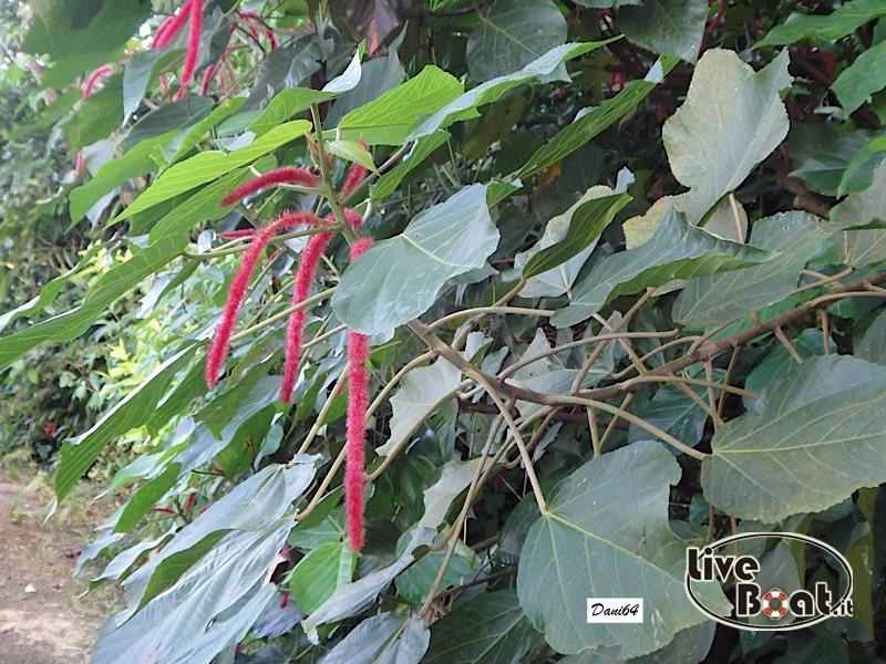 Barbados (Antille) 15/01/2011-dsc01808-jpg
