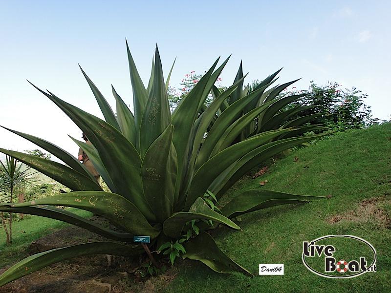 Barbados (Antille) 15/01/2011-dsc01816-jpg